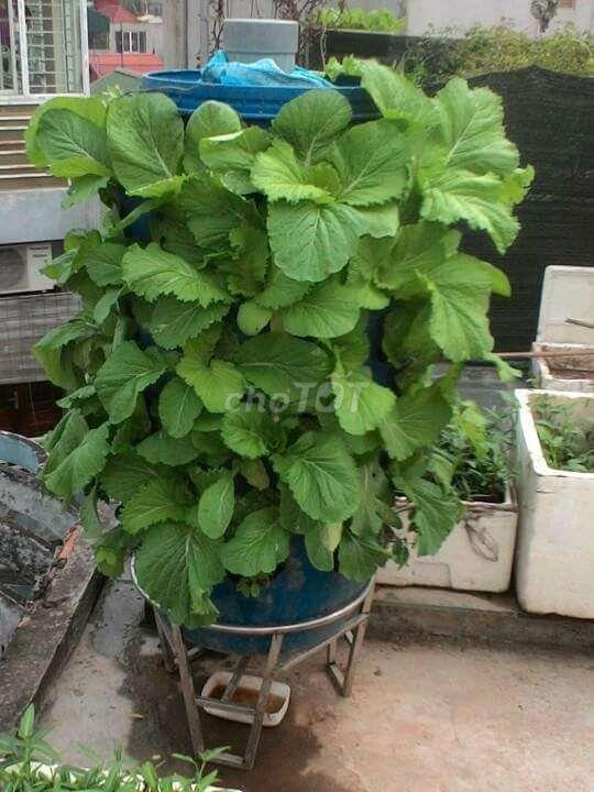 0343396476 - Tháp trồng rau giá rẻ