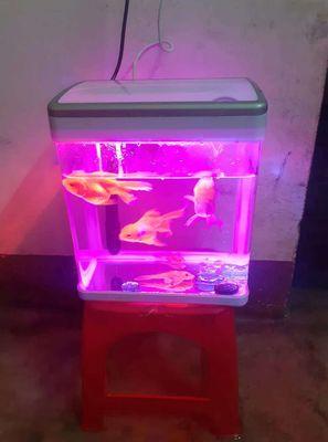0932390433 - Bán hồ cá để bàn full pk lọc đèn led nhìu màu
