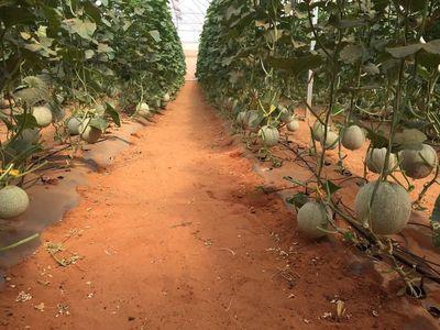Bán 4578m2 đất nông nghiệp hồng thái chỉ 320tr