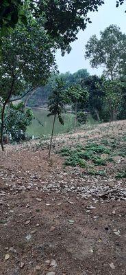 Chính chủ cần bán đất biệt thự, trang trại 3000m2