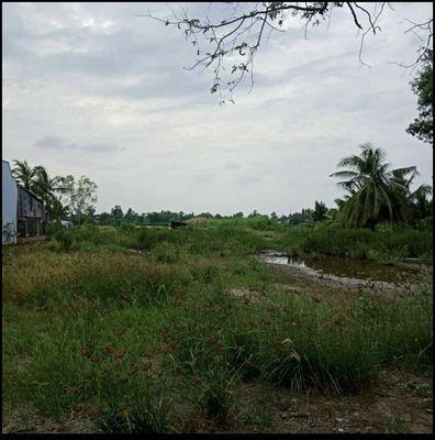 Đất Huyện Cái Nước 12.000m²