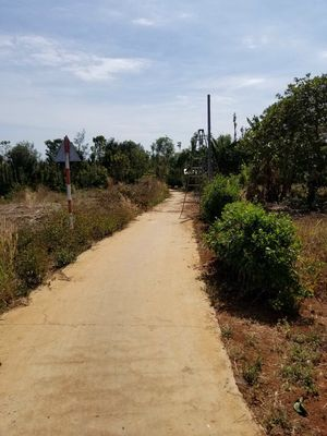 Đất rẫy trên đường liên tỉnh nối QL1 với sân bay