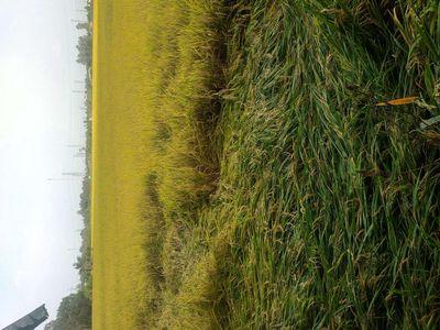 Bán đất vườn có lộ nông thôn