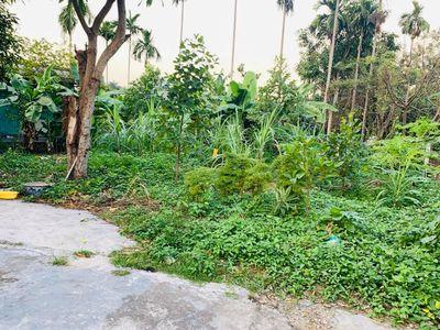 Bán đất Đống Hương, Quán Toan, 60m2 giá 530 trieu.