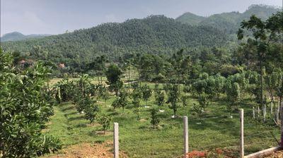 500k/m2 đất thổ cư tại xã Ngọc Thanh, Phúc Yên, VP