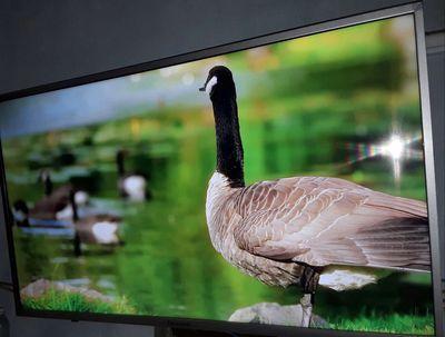 Panasonic 43in led smart 4K - 2160P cực kì sắc nét
