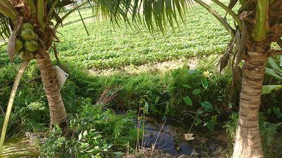 Bán 8.000 m2 đất CTLN tại km 14 Hàm Chính
