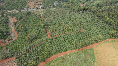 Đất nông nghiệp siêu đẹp, giá siêu tốt,tại Đắk Mil