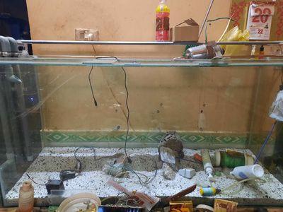 Bể nuôi cá. . đèn+ lọc thủy sinh