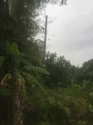 Đất Vườn - Trường Long - Phong Điền - TP. Cần Thơ