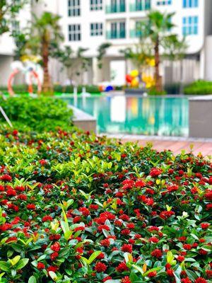 Bán Sadora 3pn, view hồ bơi, nội thất đẹp, giá 9t