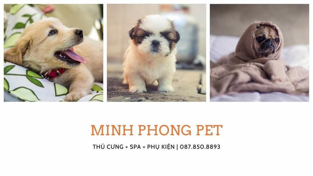 Thú Cưng Minh Phong
