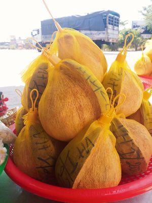 Dừa sáp đặc sản Trà Vinh