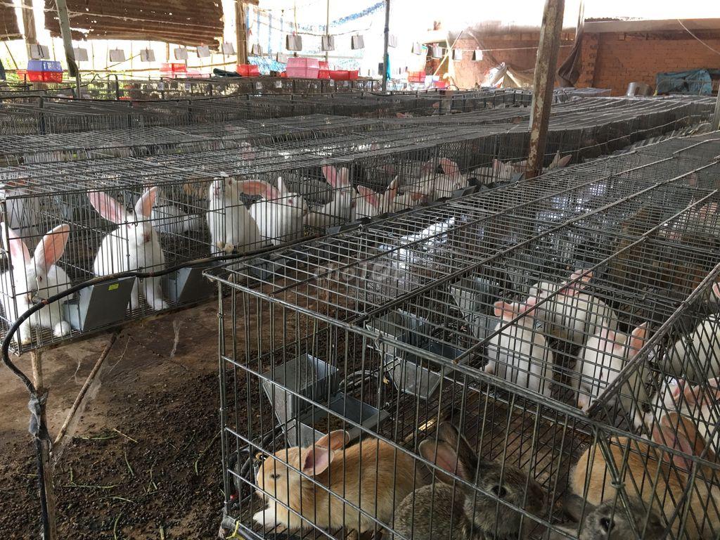 0967848957 - Thịt thỏ Chính Vân - Long Khánh, Đồng Nai