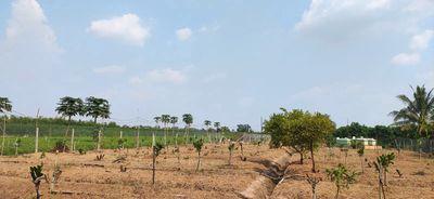 Cần mua đất cập mặt tiền đường nhựa hoặc đal