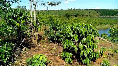 Đất nông nghiệp rẫy cà phê, điều và tiêu
