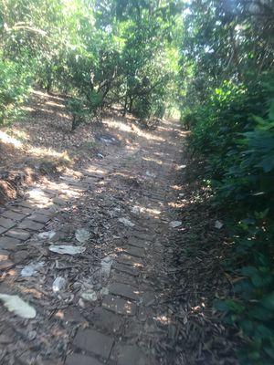 Đất cây ăn trái Bảo Hoà 13.500m2 350tr/sào