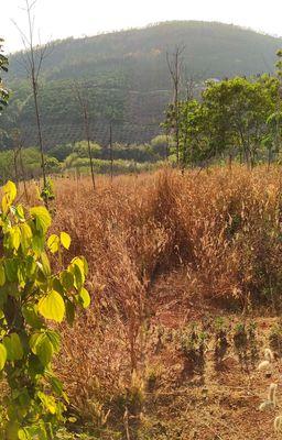 Đất sổ đỏ Trường Xuân Đắk Song Đắk Nông