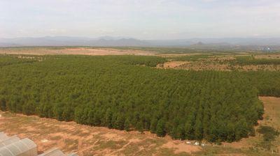 Bán 9867m2 đất vườn bình thuận vuông đẹp 789 triệu