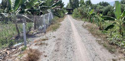 Tri tôn cần bán đất nông nghiêp 54000