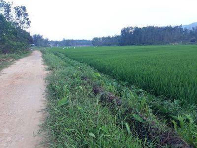 Bán đất vườn đà nẵng view cánh đồng xanh 760tr