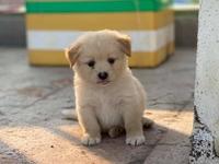 Cửa hàng Phú Quý Pets