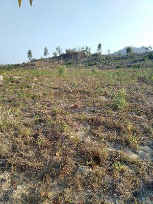 Đất Huyện Hàm Tân 1 mẫu  cần bán 500tr