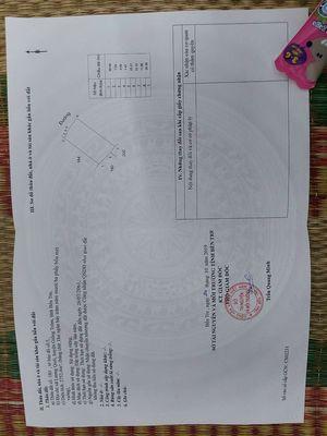 Vườn dừa xã Lương Quới huyện Giồng Trôm