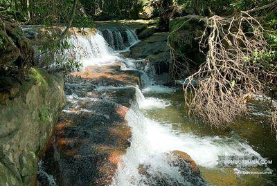 Bán lô đất rừng có sổ. Viêu suối cực kì đẹp