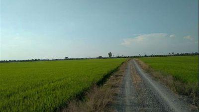 Đất 29,8 Công Ruộng 150x200 Tân Hội Cơ Tân Hồng