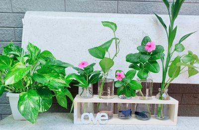 Sét kệ gỗ kèm 5 bình thủy tinh cắm hoa trang trí