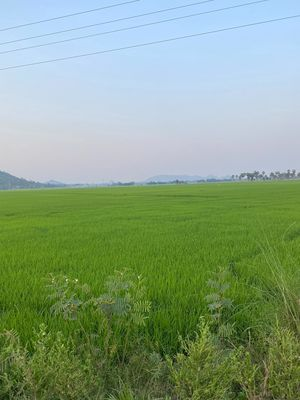 Đất Huyện Tịnh Biên 17.500m²