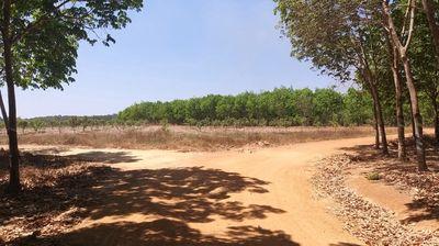 Đất 5ha mặt tiền 290m Tân Đức- Bình Thuận 5tỷ.
