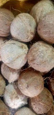 Dừa nước.2kg50 bao nước ngọt.10 quả 120.000