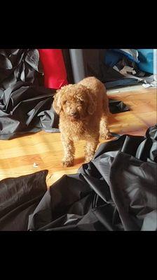 Chó cái gần 3 năm tuổi , ngoan , khôn , nhanh nhen