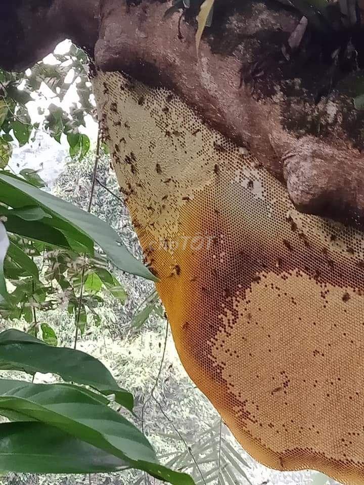 0379152730 - mật ong rừng nguyên chất 100%, bao test