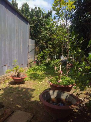 Nhà p8 có sân vườn ngang 4,7 dài 40