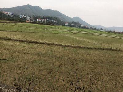 Đất 1ha có 100m mặt tiền tại Tiến Xuân, Thạch Thất