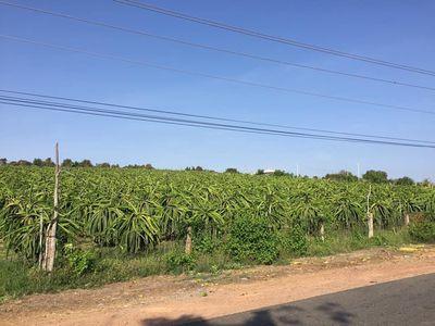 Bán 25,810m2 đất vườn hồng thái sát liên xã 90k/m2