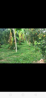 Đất thích hợp làm trang trại .trồng cây.tặng 100m