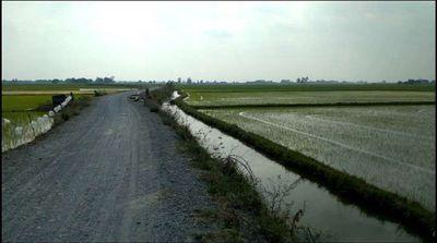 Đất 14 công Ruộng 132x106 Mặt Tiền, Huyện Tân Hồng