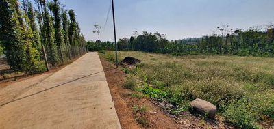 Đất Lâm San 2000m2 có 57 mét mặt tiền, khu dân cư