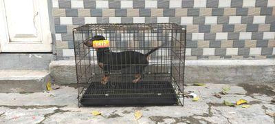 Lồng sơn tĩnh điện chuồng cho chó mèo thú cưng