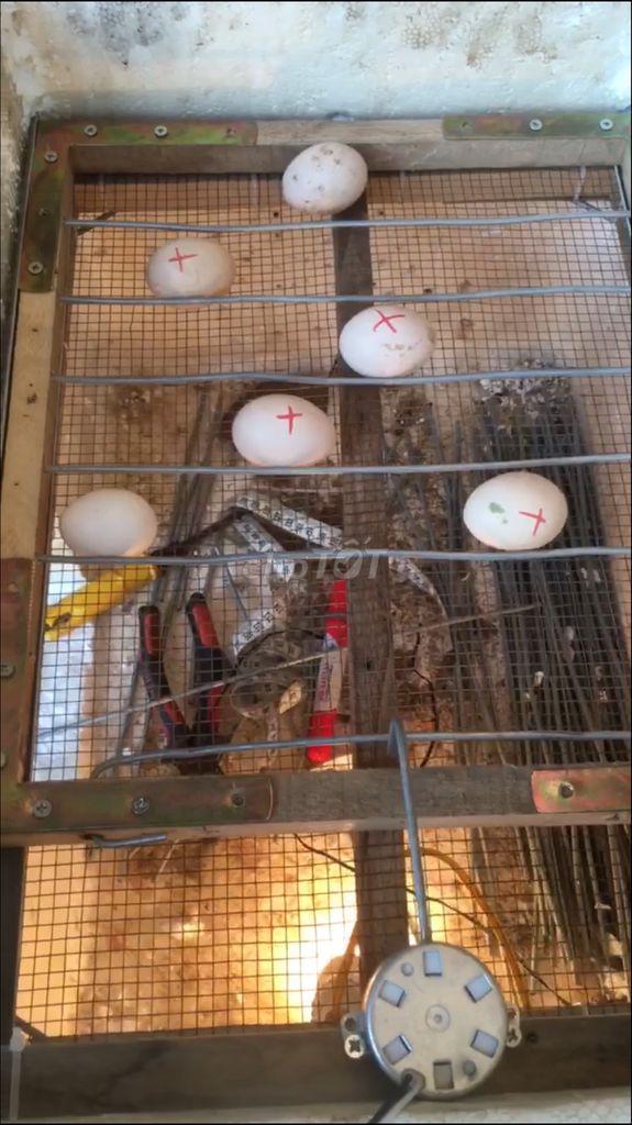 0856998789 - máy ấp trứng mini