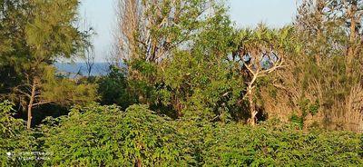 Đất rẻ view biển gần xóm(Đã có sổ)