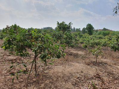 Đất 1.4 mẫu Tân Đức - Hàm Tân gần KCN