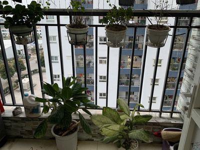 Bán căn hộ 1 tỷ giành cho 2 vợ chồng Hà Đông