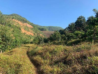 Bán rẫy sầu riêng đang thu hoạch tại huyện khánh s