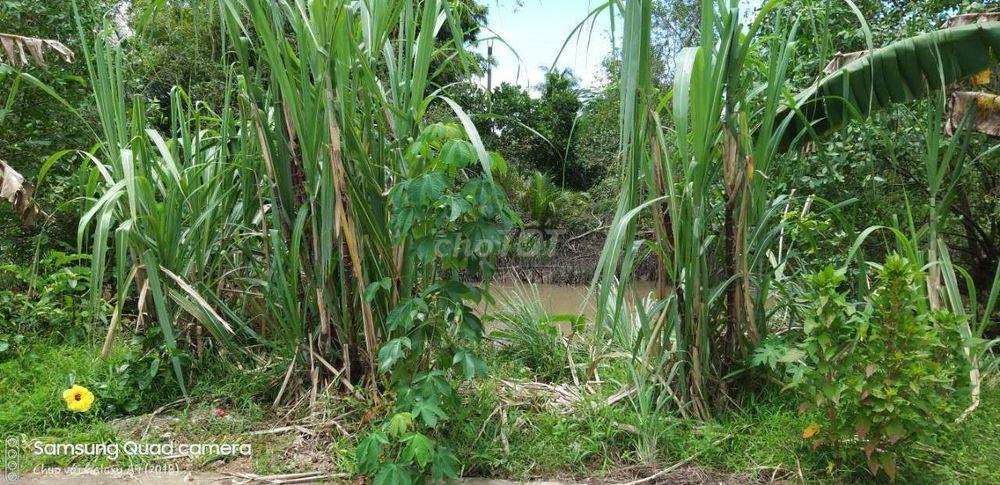 Bán nhà cấp 4 và vườn cây ăn trái tại Ngã Bát CR