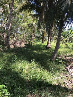 Đất vườn dừa thổ cư tại Mỹ Chánh, Ba Tri, Bến Tre
